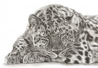 Amurleopard_brown