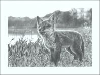 Fox_brown