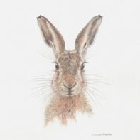 Brown-Hare-IV