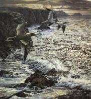 gannets-flight-sea-print_2048x2048