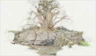 Lathkill-Dale-Tree